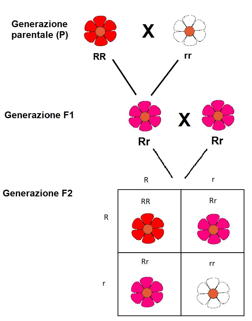 Il Gruppo Sanguigno Lanemia Falciforme E I Fiori Della Bocca Di